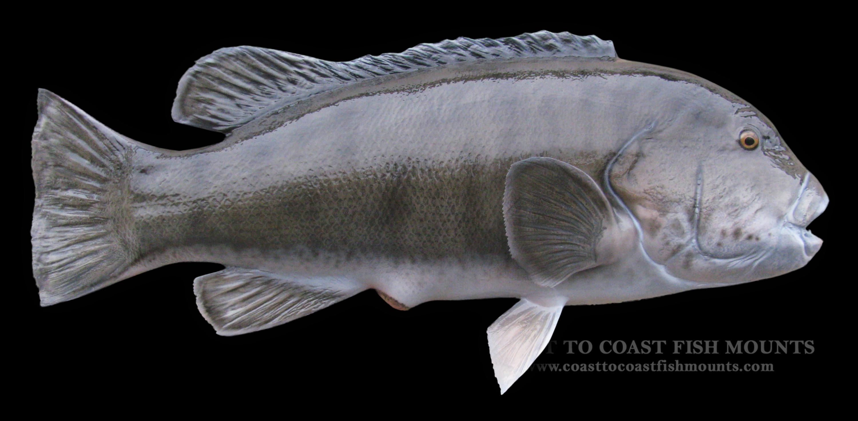 blackfish - photo #20