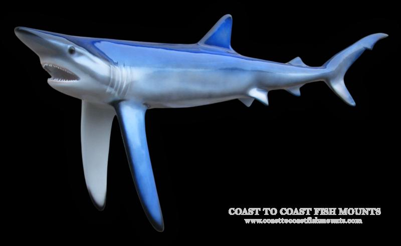 Blue shark fish mount and fish replicas coast to coast blue shark fish mount thecheapjerseys Choice Image