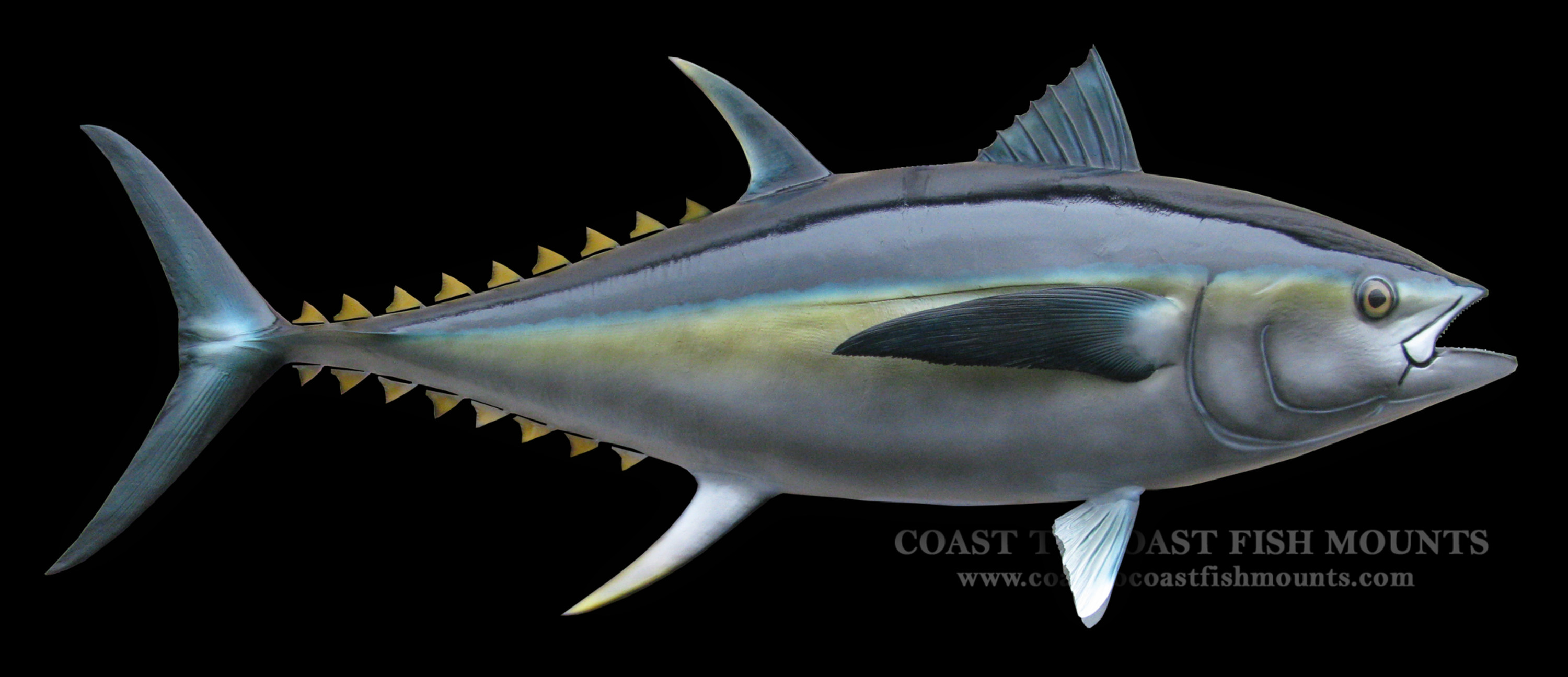 Bluefin tuna fish mount and fish replicas coast to coast for Tuna fish can
