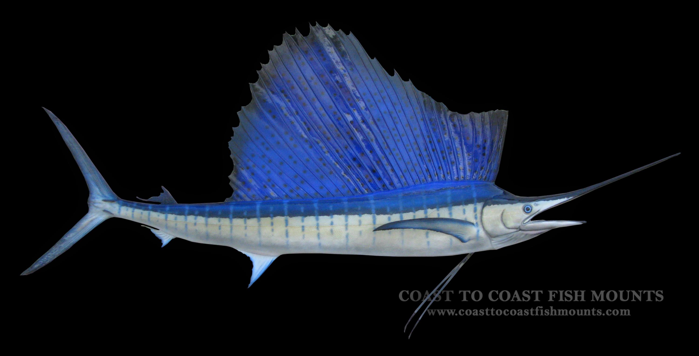 Sailfish fish mount and fish replicas coast to coast for Fishpond fishing