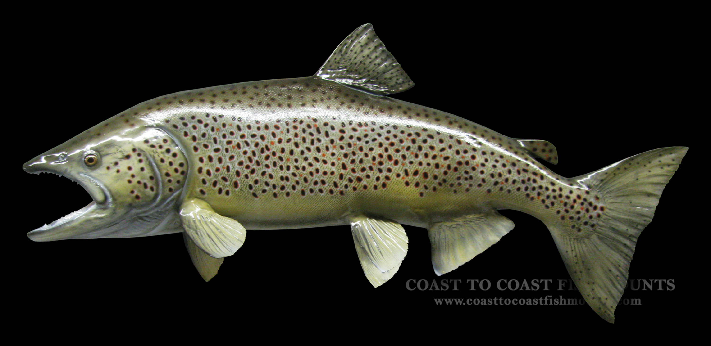 Brown trout fish mount and fish replicas coast to coast for Replica fish mounts