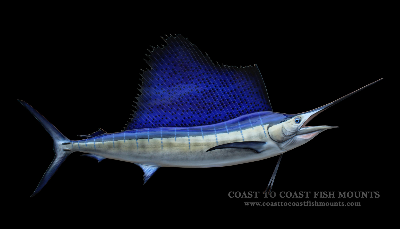 Custom Home Online Sailfish Fish Mount And Fish Replicas Coast To Coast