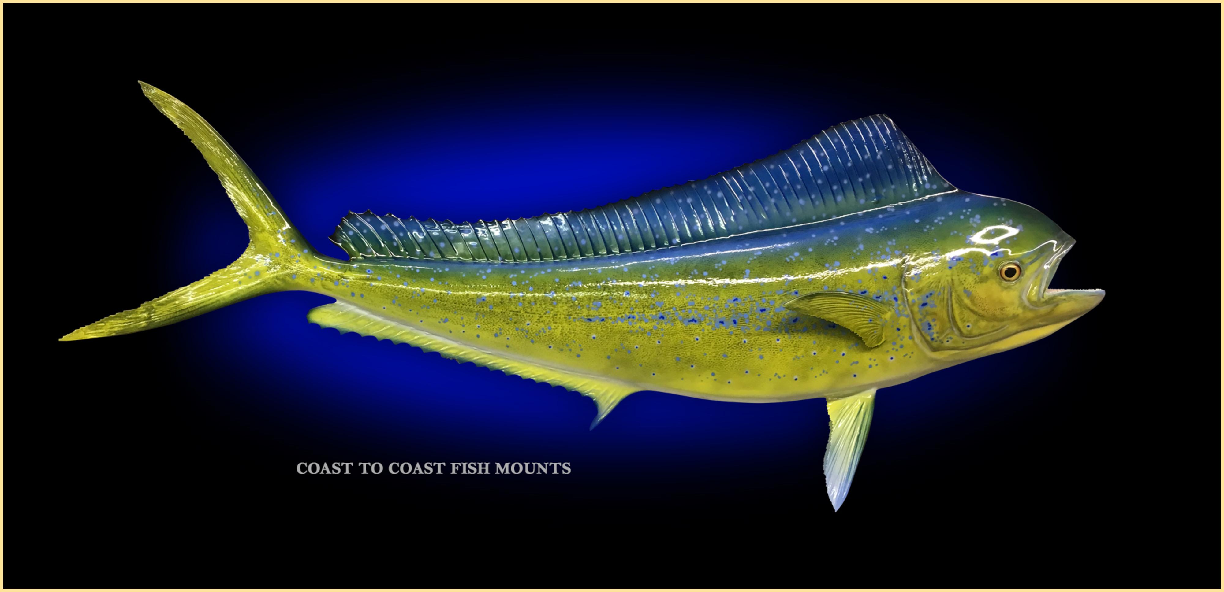 Dolphin (Mahi) Fish Mount and Fish Replicas | Coast-to-Coast