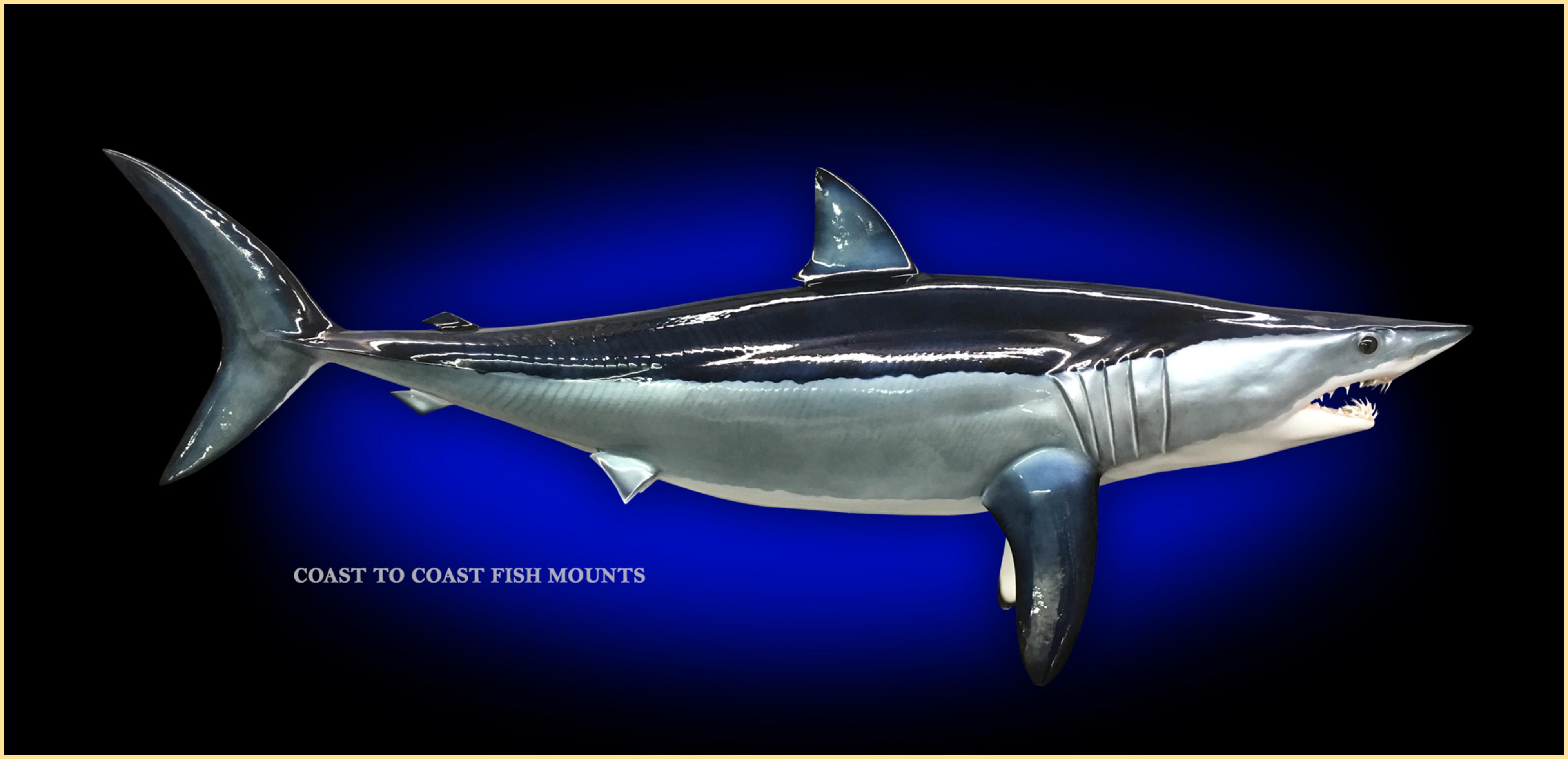 Mako shark fish mount and fish replicas coast to coast mako shark fish mount thecheapjerseys Choice Image
