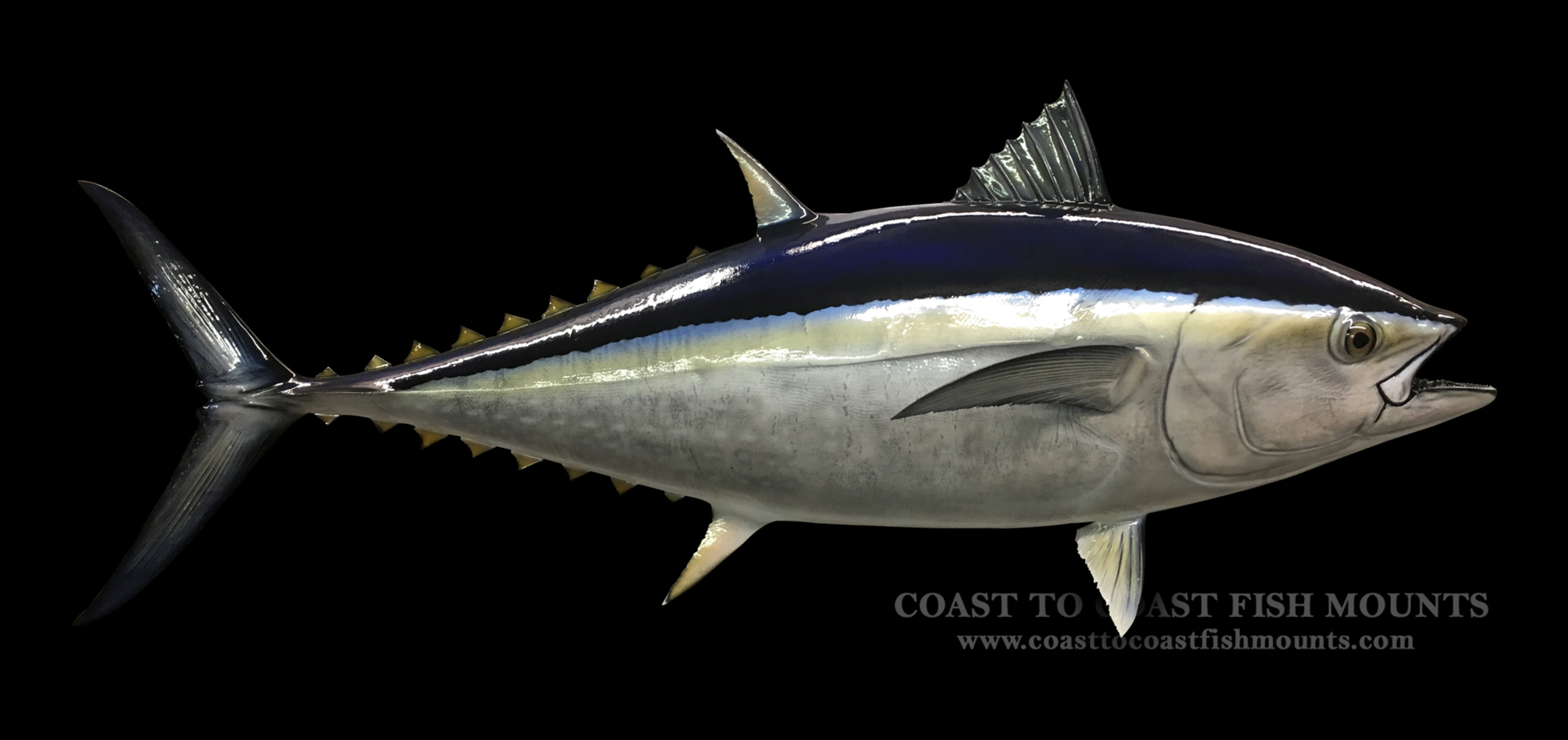 Bluefin tuna fish mount and fish replicas coast to coast for Fishpond fishing