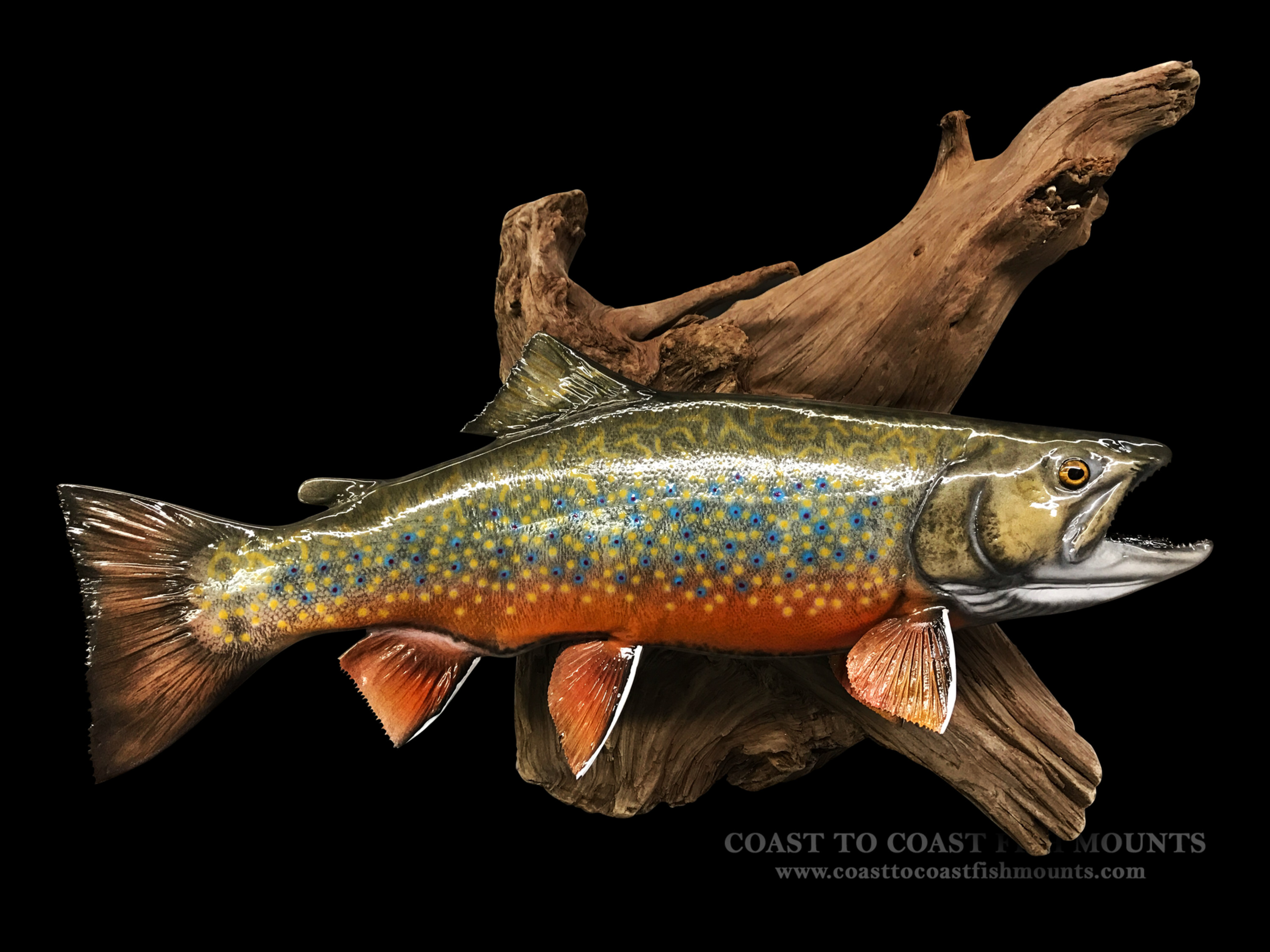 Brook Trout Fishing Northern Ontario Canada