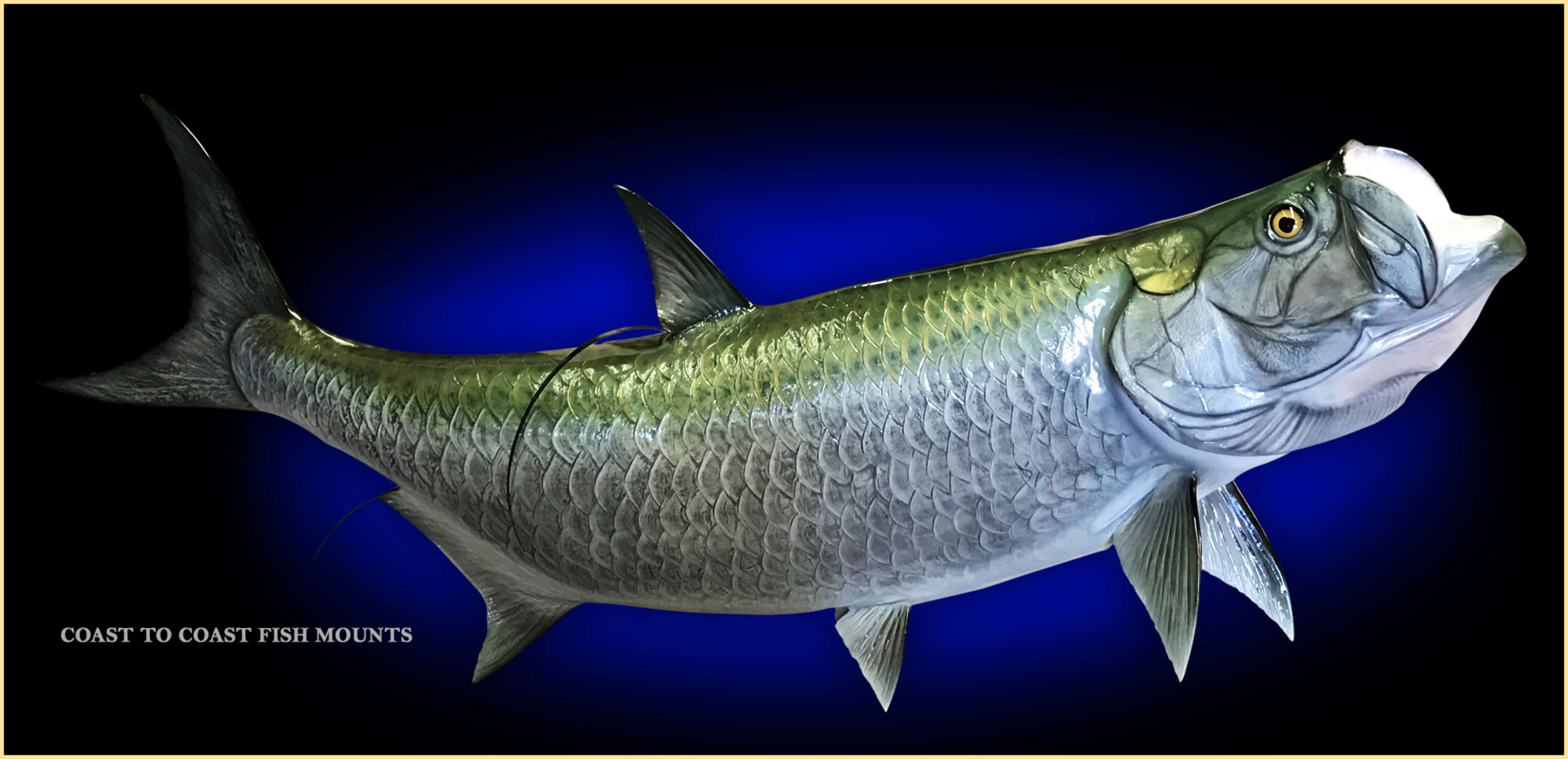 Tarpon fish mount and fish replicas coast to coast for Image of fish