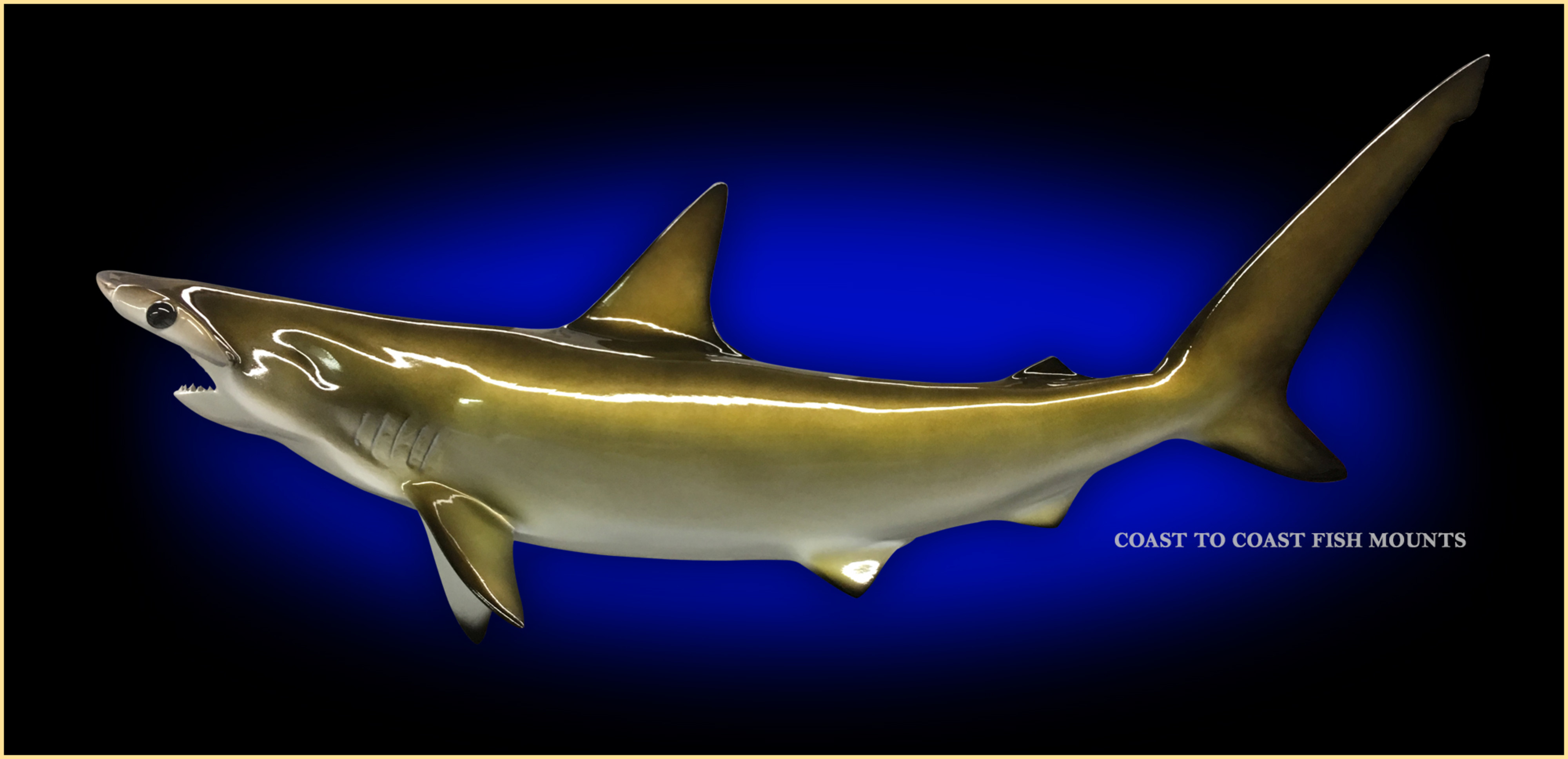 Hammerhead shark fish mount and fish replicas coast to coast hammerhead shark fish mount thecheapjerseys Image collections
