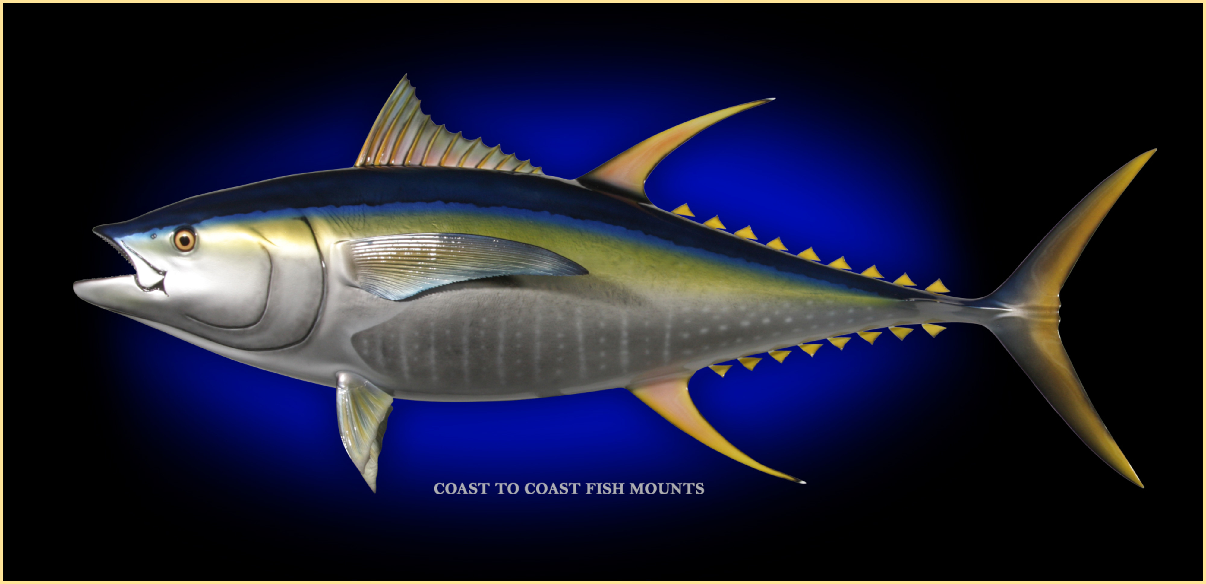 Yellowfin Tuna Fish Mount And Fish Replicas Coast To Coast