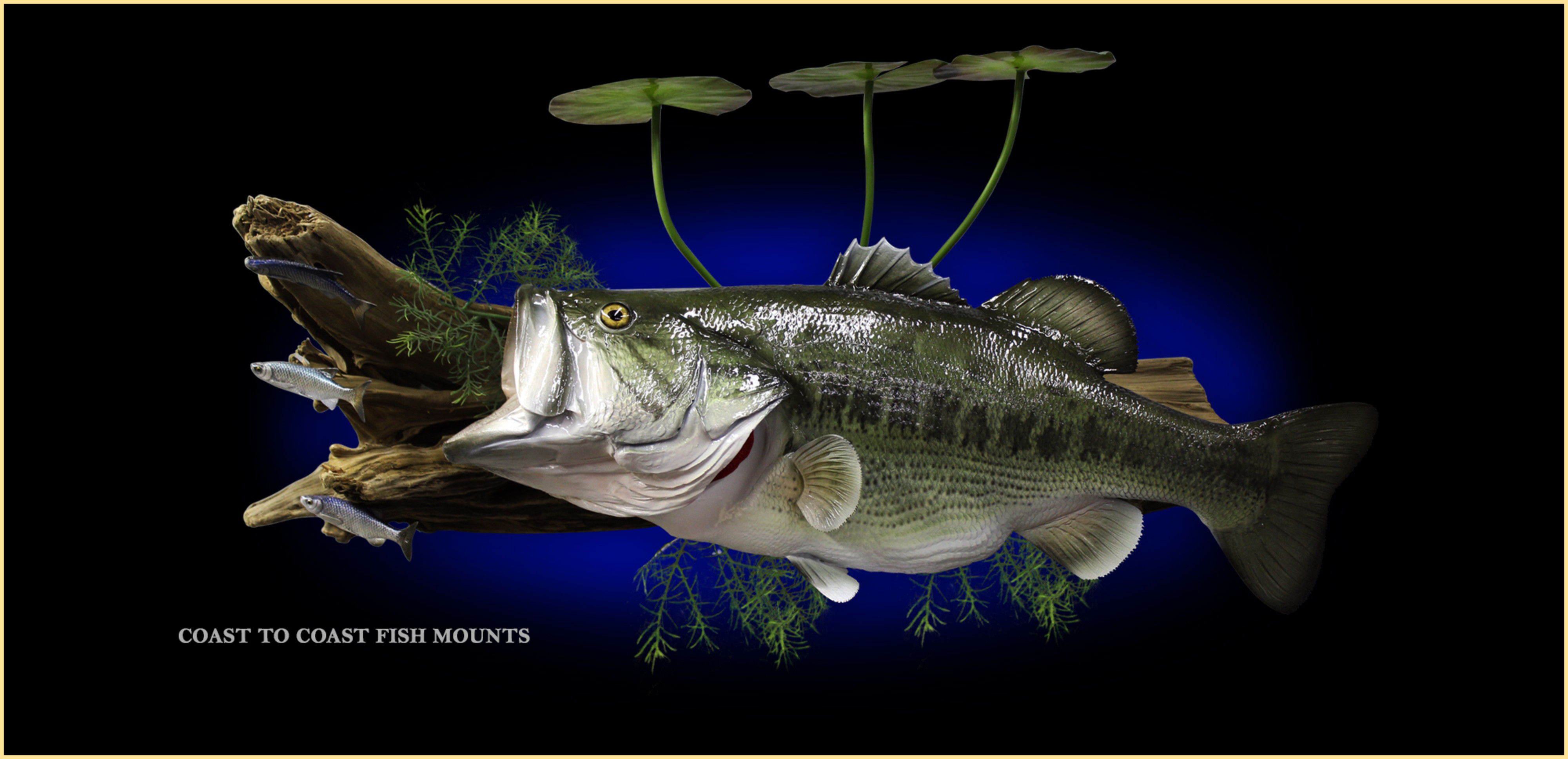 Largemouth bass fish mount and fish replicas coast to coast for What fish is this