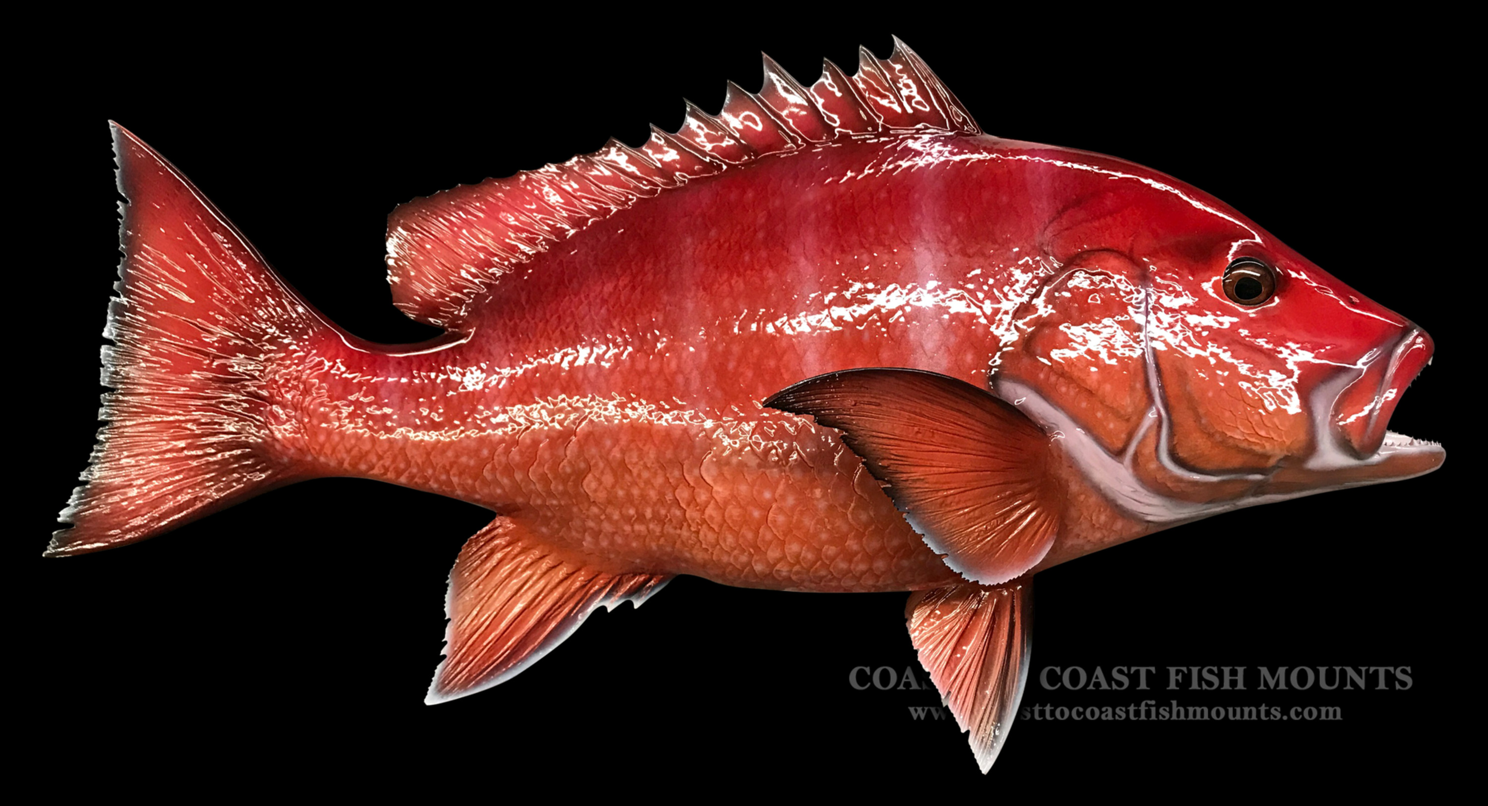Red snapper fish mount and fish replicas coast to coast for Red snapper fishing