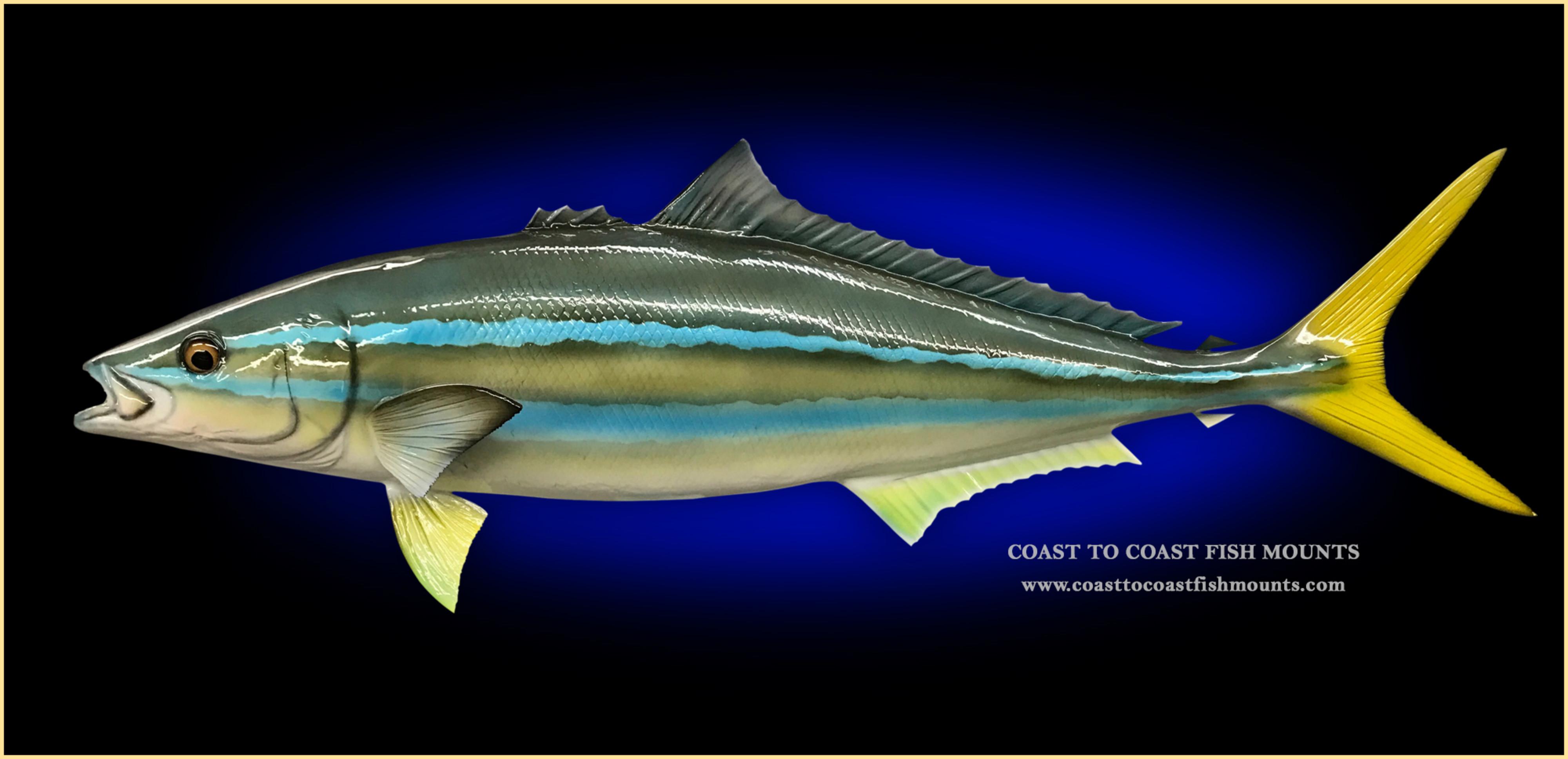 Rainbow Runner Fish Mount and Fish Replicas | Coast-to-Coast