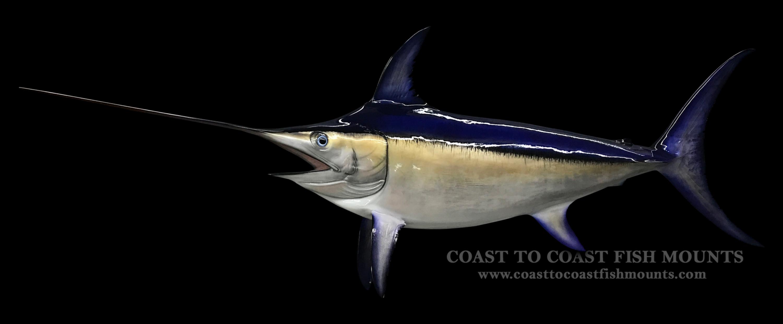 Swordfish fish mount and fish replicas coast to coast for Replica fish mounts