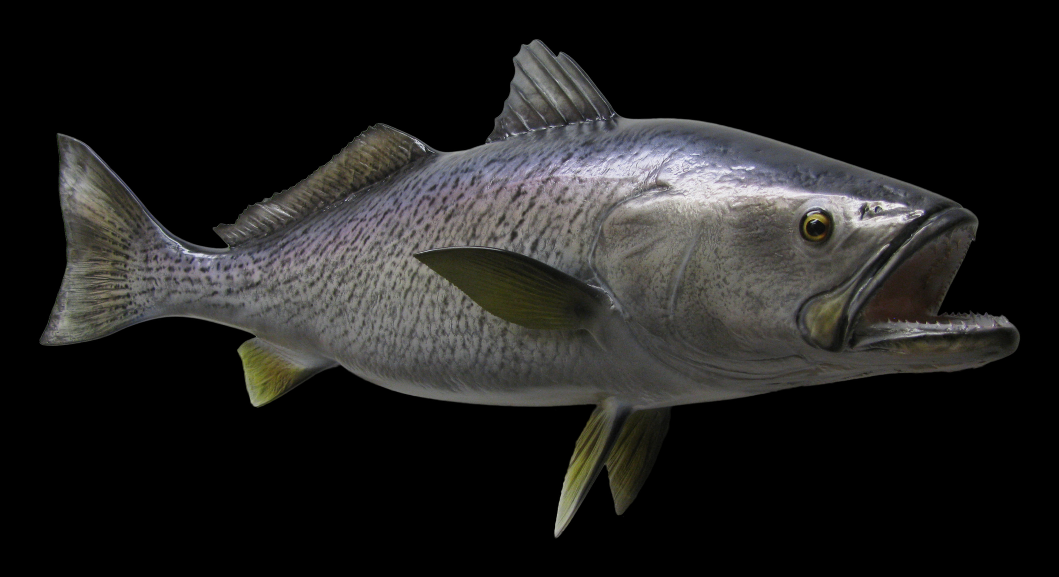 Sea trout weakfish fish mount and fish replicas coast for Replica fish mounts