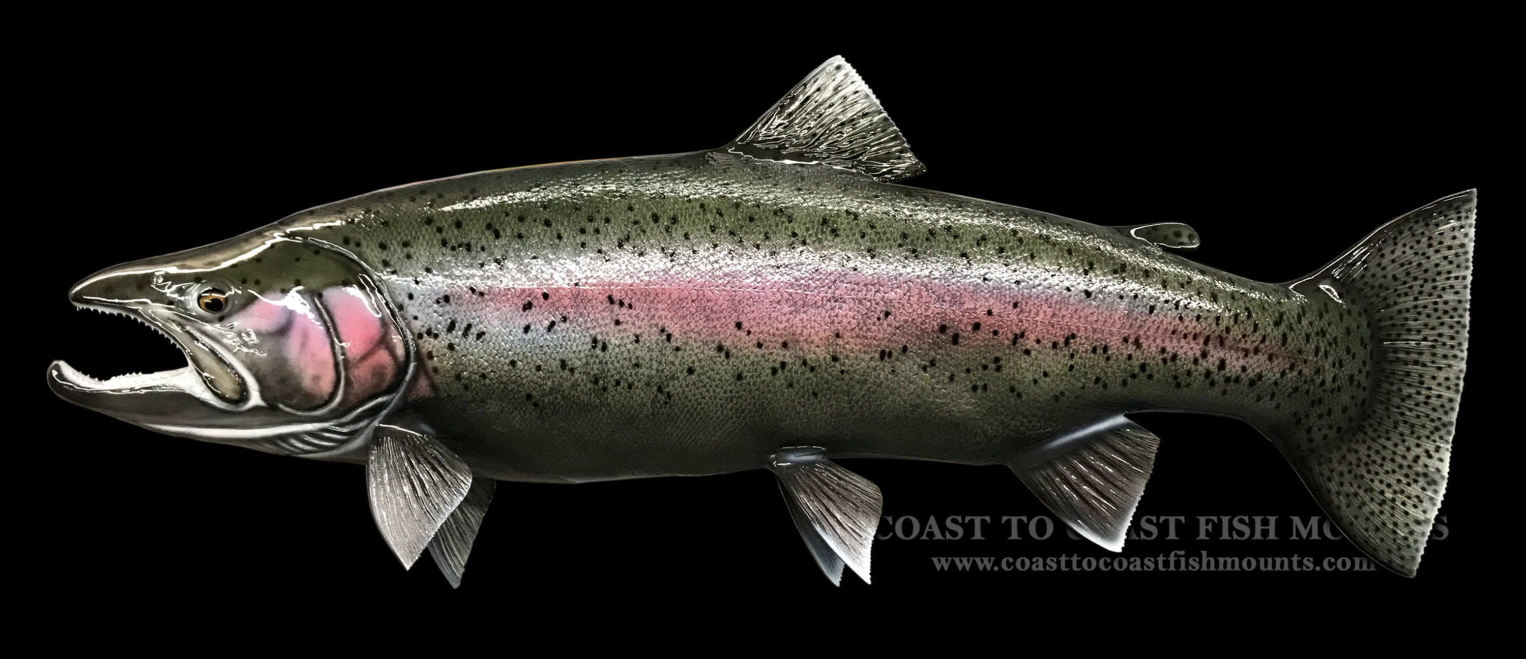 Rainbow steelhead trout fish mount and fish replicas for How to fish for rainbow trout