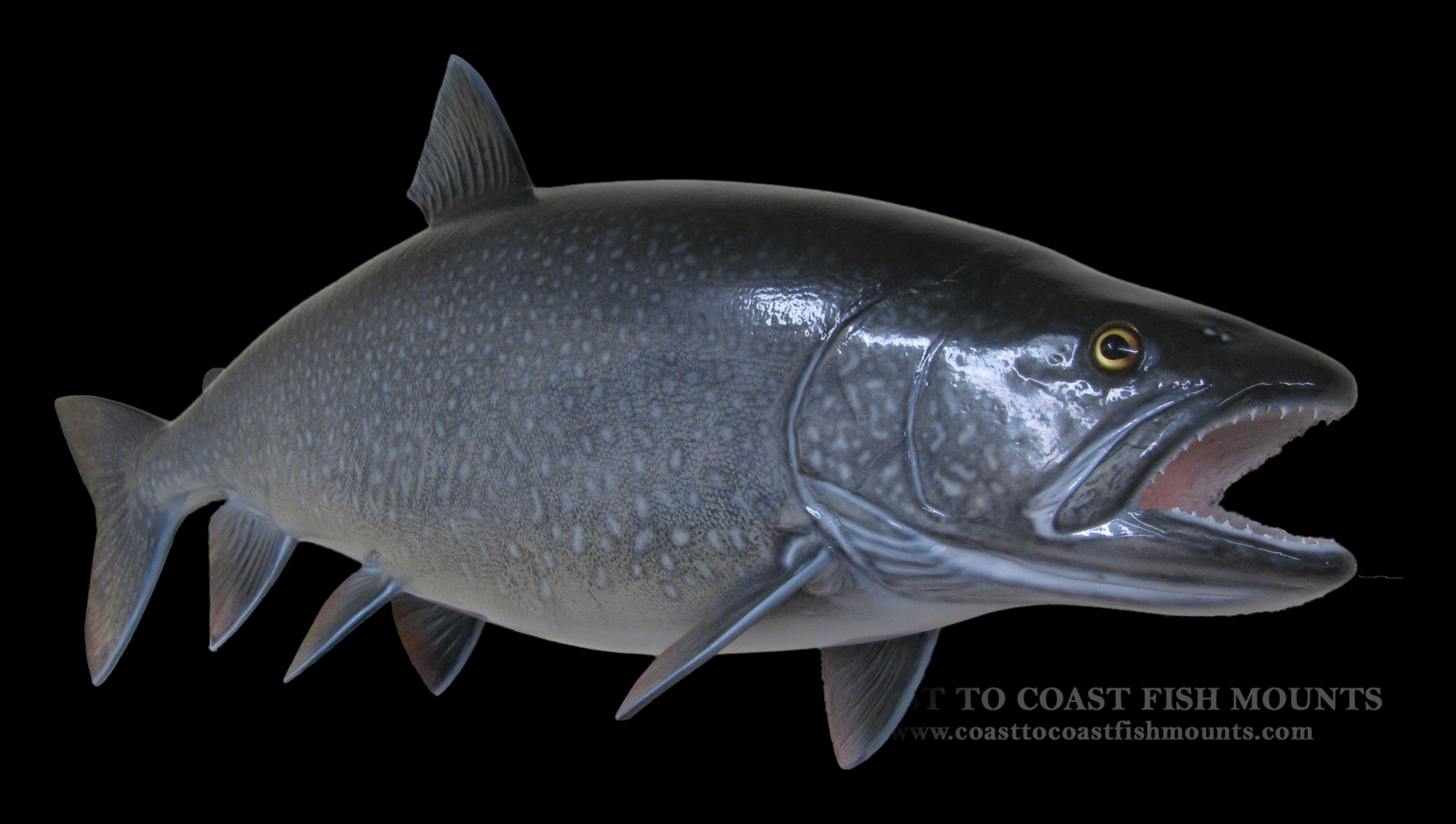 Lake trout fish mount and fish replicas coast to coast for Replica fish mounts