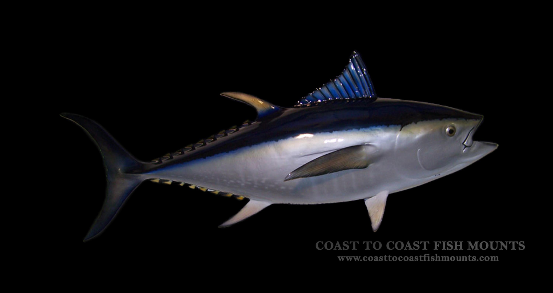 Bluefin Tuna Fish Mount And Fish Replicas Coast To Coast