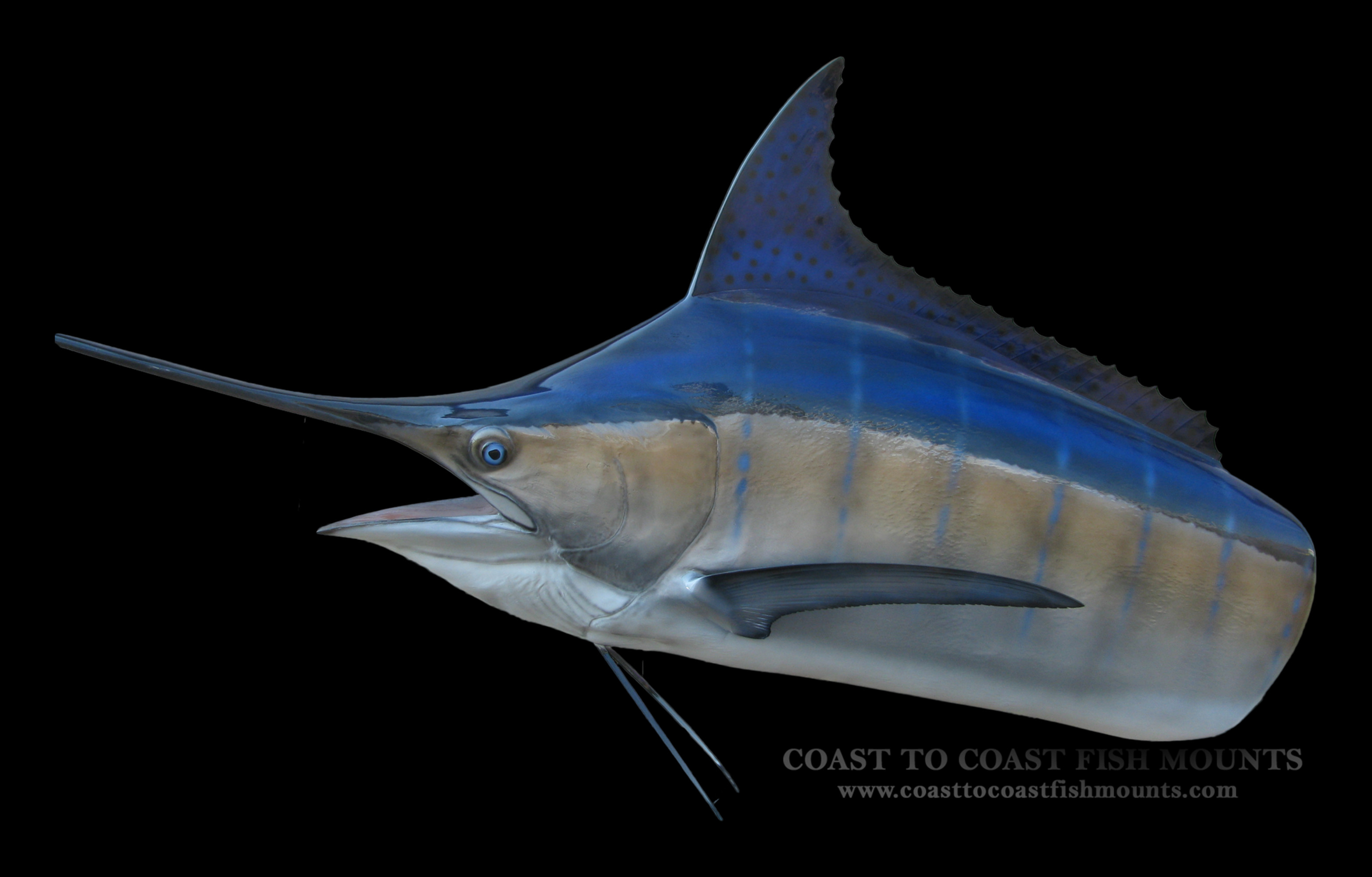 Marlin head mount fish mount and fish replicas coast to for Replica fish mounts