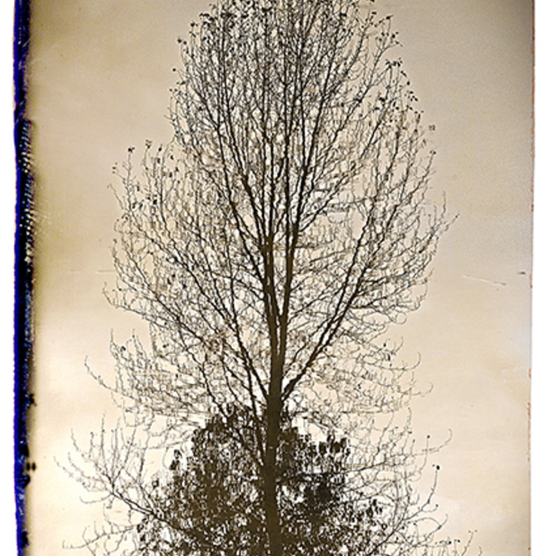 Reflection In Pond.tree  Size: Matted 12x16 print photography